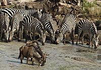 Serengeti - Produktdetailbild 8