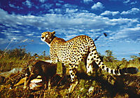 Serengeti - Produktdetailbild 1