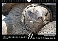 Seychellen Impressionen - Ansichten und Begegnungen auf La Digue (Wandkalender 2019 DIN A4 quer) - Produktdetailbild 11