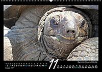 Seychellen Impressionen - Ansichten und Begegnungen auf La Digue (Wandkalender 2019 DIN A2 quer) - Produktdetailbild 11