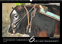 Seychellen Impressionen - Ansichten und Begegnungen auf La Digue (Wandkalender 2019 DIN A3 quer) - Produktdetailbild 6