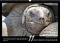 Seychellen Impressionen - Ansichten und Begegnungen auf La Digue (Wandkalender 2019 DIN A3 quer) - Produktdetailbild 11