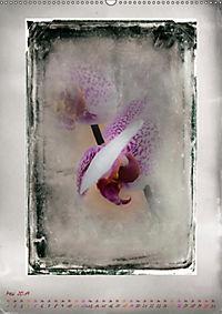 Shabby - Orchidee, Interpretation auf alten Fotoplatten (Wandkalender 2019 DIN A2 hoch) - Produktdetailbild 5