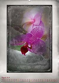 Shabby - Orchidee, Interpretation auf alten Fotoplatten (Wandkalender 2019 DIN A2 hoch) - Produktdetailbild 8