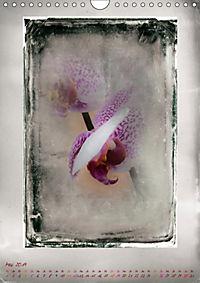Shabby - Orchidee, Interpretation auf alten Fotoplatten (Wandkalender 2019 DIN A4 hoch) - Produktdetailbild 5