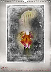 Shabby - Orchidee, Interpretation auf alten Fotoplatten (Wandkalender 2019 DIN A4 hoch) - Produktdetailbild 6