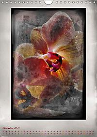 Shabby - Orchidee, Interpretation auf alten Fotoplatten (Wandkalender 2019 DIN A4 hoch) - Produktdetailbild 12