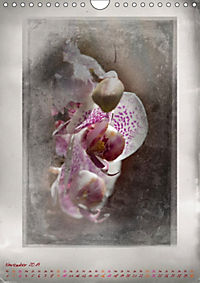 Shabby - Orchidee, Interpretation auf alten Fotoplatten (Wandkalender 2019 DIN A4 hoch) - Produktdetailbild 11