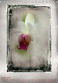 Shabby - Orchidee, Interpretation auf alten Fotoplatten (Tischkalender 2019 DIN A5 hoch) - Produktdetailbild 1