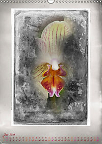 Shabby - Orchidee, Interpretation auf alten Fotoplatten (Wandkalender 2019 DIN A3 hoch) - Produktdetailbild 6