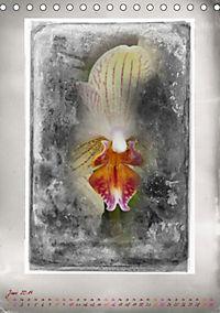 Shabby - Orchidee, Interpretation auf alten Fotoplatten (Tischkalender 2019 DIN A5 hoch) - Produktdetailbild 6