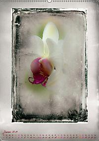 Shabby - Orchidee, Interpretation auf alten Fotoplatten (Wandkalender 2019 DIN A2 hoch) - Produktdetailbild 1