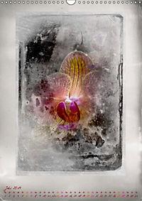Shabby - Orchidee, Interpretation auf alten Fotoplatten (Wandkalender 2019 DIN A3 hoch) - Produktdetailbild 7