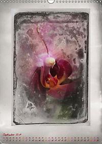 Shabby - Orchidee, Interpretation auf alten Fotoplatten (Wandkalender 2019 DIN A3 hoch) - Produktdetailbild 9