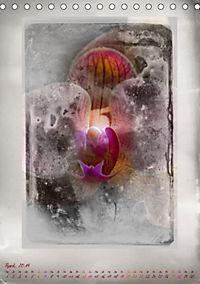 Shabby - Orchidee, Interpretation auf alten Fotoplatten (Tischkalender 2019 DIN A5 hoch) - Produktdetailbild 4