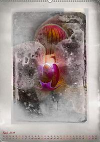 Shabby - Orchidee, Interpretation auf alten Fotoplatten (Wandkalender 2019 DIN A2 hoch) - Produktdetailbild 4
