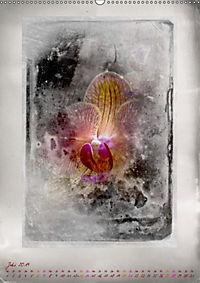 Shabby - Orchidee, Interpretation auf alten Fotoplatten (Wandkalender 2019 DIN A2 hoch) - Produktdetailbild 7