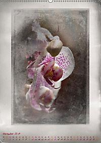Shabby - Orchidee, Interpretation auf alten Fotoplatten (Wandkalender 2019 DIN A2 hoch) - Produktdetailbild 11