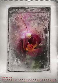 Shabby - Orchidee, Interpretation auf alten Fotoplatten (Wandkalender 2019 DIN A2 hoch) - Produktdetailbild 9