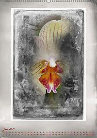 Shabby - Orchidee, Interpretation auf alten Fotoplatten (Wandkalender 2019 DIN A2 hoch) - Produktdetailbild 6
