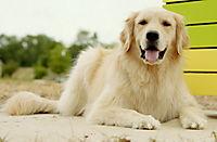 Shadow - Ein Hund zum Verlieben - Produktdetailbild 2