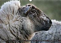 Sheep Portraits (Wall Calendar 2019 DIN A3 Landscape) - Produktdetailbild 3