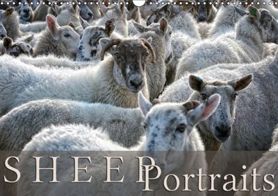 Sheep Portraits (Wall Calendar 2019 DIN A3 Landscape), Martina Cross