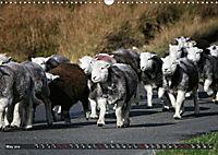Sheep Portraits (Wall Calendar 2019 DIN A3 Landscape) - Produktdetailbild 5