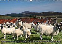 Sheep Portraits (Wall Calendar 2019 DIN A3 Landscape) - Produktdetailbild 7