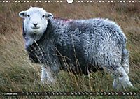 Sheep Portraits (Wall Calendar 2019 DIN A3 Landscape) - Produktdetailbild 10