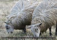 Sheep Portraits (Wall Calendar 2019 DIN A3 Landscape) - Produktdetailbild 11