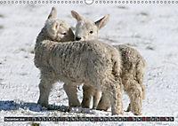 Sheep Portraits (Wall Calendar 2019 DIN A3 Landscape) - Produktdetailbild 12