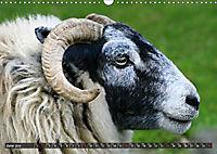 Sheep Portraits (Wall Calendar 2019 DIN A3 Landscape) - Produktdetailbild 6