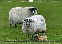 Sheep Portraits (Wall Calendar 2019 DIN A4 Landscape) - Produktdetailbild 4