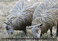 Sheep Portraits (Wall Calendar 2019 DIN A4 Landscape) - Produktdetailbild 11