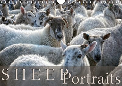 Sheep Portraits (Wall Calendar 2019 DIN A4 Landscape), Martina Cross
