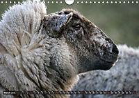 Sheep Portraits (Wall Calendar 2019 DIN A4 Landscape) - Produktdetailbild 3