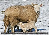 Sheep Portraits (Wall Calendar 2019 DIN A4 Landscape) - Produktdetailbild 2