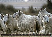 Sheep Portraits (Wall Calendar 2019 DIN A4 Landscape) - Produktdetailbild 9