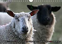 Sheep Portraits (Wall Calendar 2019 DIN A4 Landscape) - Produktdetailbild 8