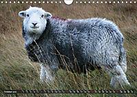 Sheep Portraits (Wall Calendar 2019 DIN A4 Landscape) - Produktdetailbild 10