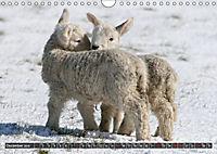 Sheep Portraits (Wall Calendar 2019 DIN A4 Landscape) - Produktdetailbild 12