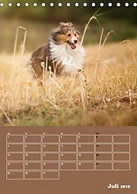 SHELTIES Herzensbrecher auf 4 Pfoten (Tischkalender 2019 DIN A5 hoch) - Produktdetailbild 7