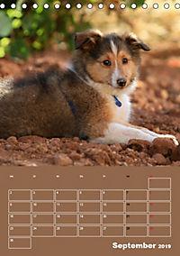 SHELTIES Herzensbrecher auf 4 Pfoten (Tischkalender 2019 DIN A5 hoch) - Produktdetailbild 9