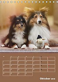 SHELTIES Herzensbrecher auf 4 Pfoten (Tischkalender 2019 DIN A5 hoch) - Produktdetailbild 10