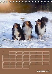 SHELTIES Herzensbrecher auf 4 Pfoten (Tischkalender 2019 DIN A5 hoch) - Produktdetailbild 1