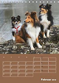 SHELTIES Herzensbrecher auf 4 Pfoten (Tischkalender 2019 DIN A5 hoch) - Produktdetailbild 2