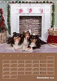SHELTIES Herzensbrecher auf 4 Pfoten (Tischkalender 2019 DIN A5 hoch) - Produktdetailbild 12