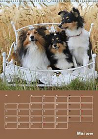 SHELTIES Herzensbrecher auf 4 Pfoten (Wandkalender 2019 DIN A2 hoch) - Produktdetailbild 5
