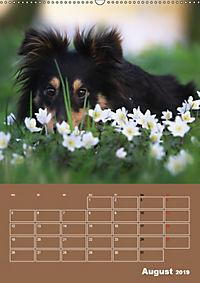 SHELTIES Herzensbrecher auf 4 Pfoten (Wandkalender 2019 DIN A2 hoch) - Produktdetailbild 8